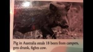 Ein Schwein, das am Wochenende so richtig die Sau rausgelassen hat | Lustiges | Was is hier eigentlich los?