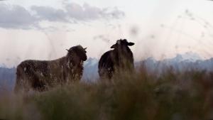 Visuell großartig: Ein Schäfer in den Schweizer Alpen | Menschen | Was is hier eigentlich los?