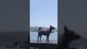 Ein Hund mit ordentlich Druck | Lustiges | Was is hier eigentlich los?