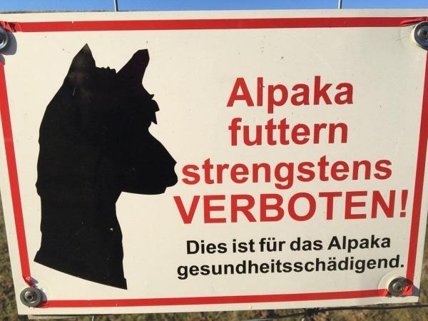 Überraschung: Alpaka aufessen verboten, weil gesundheitsschädigend für Alpakas | Lustiges | Was is hier eigentlich los? | wihel.de
