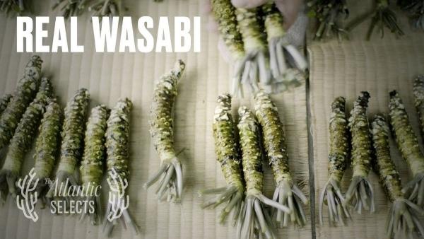 Der Wasabi-Farmer | Was gelernt | Was is hier eigentlich los? | wihel.de