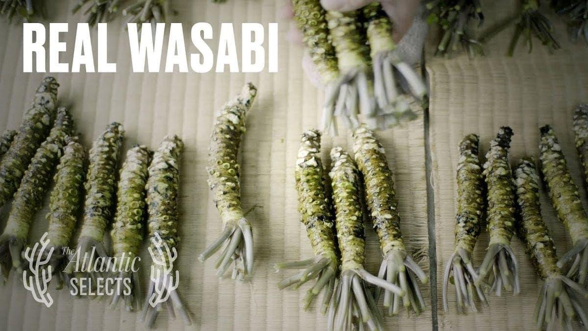 Der Wasabi-Farmer | Was gelernt | Was is hier eigentlich los?