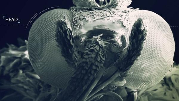 Ein Schmetterling unterm Rasterelektronenmikroskop | Was gelernt | Was is hier eigentlich los? | wihel.de