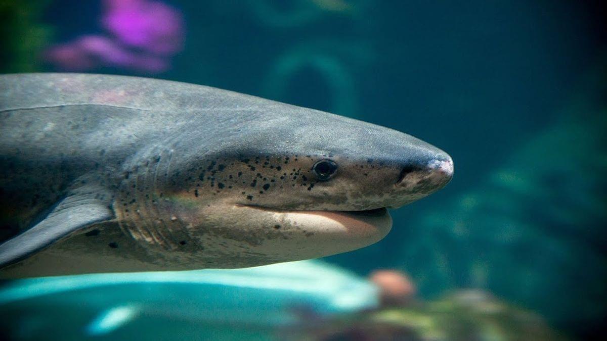 Eine Live-Cam, die die Haie im Monterey Bay-Aquarium zeigt | Awesome | Was is hier eigentlich los?