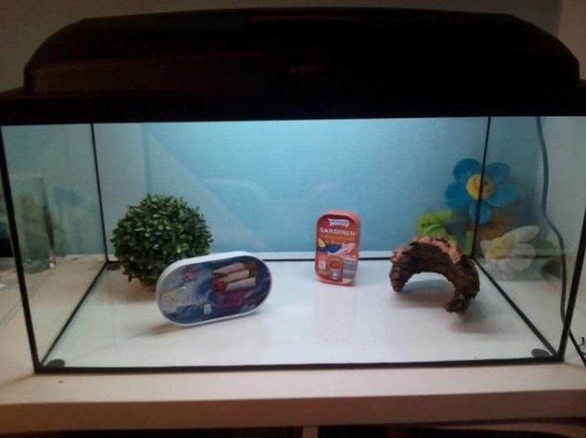 Das pflegeleichteste Aquarium der Welt | Lustiges | Was is hier eigentlich los?
