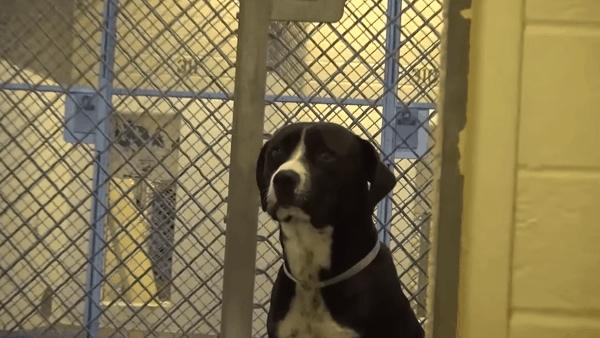 Der Moment, wenn ein Hund realisiert, dass er aus dem Tierheim abgeholt wird | Awesome | Was is hier eigentlich los? | wihel.de