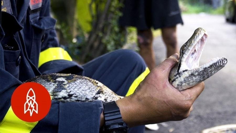 Der Schlangenfänger von Bangkok | Menschen | Was is hier eigentlich los?