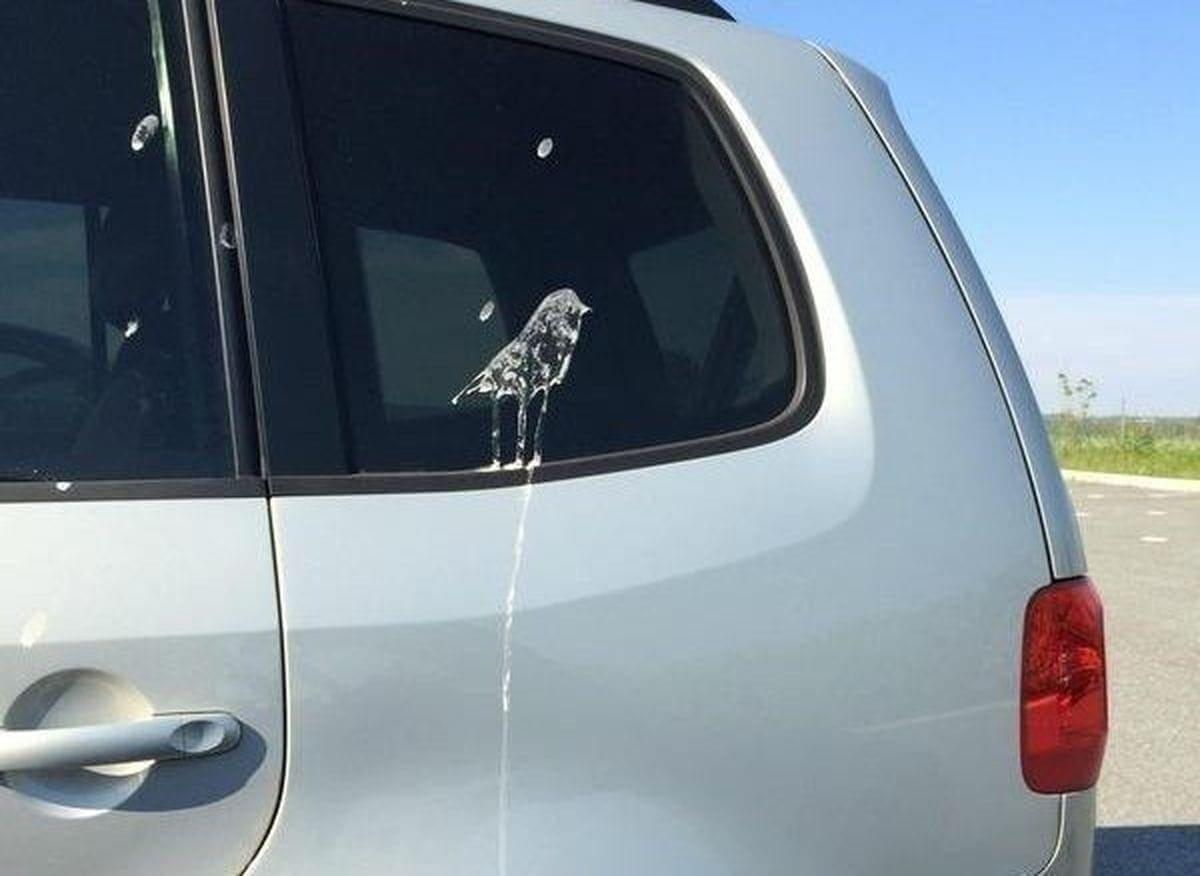 Und dann kackt dir ein Vogel ein Selfie aufs Auto | Lustiges | Was is hier eigentlich los?