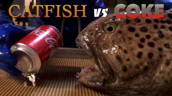Katzenfisch vs. Cola-Dose | WTF | Was is hier eigentlich los? | wihel.de