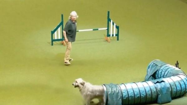 Kratu – Wie ein Hund so richtig Spaß beim Agility hat | Lustiges | Was is hier eigentlich los?