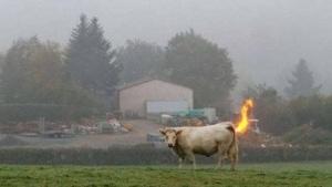 Wer wirklich Schuld am Klimawandel hat: Kühe. Und ihre Fürze! | Lustiges | Was is hier eigentlich los?