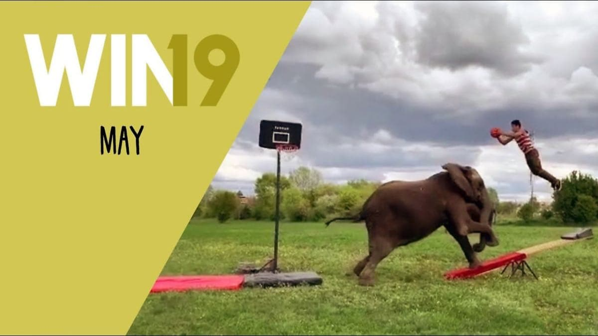 Win-Compilation Mai 2019 | Win-Compilation | Was is hier eigentlich los?
