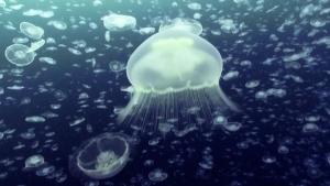 Entspannend: 10 Stunden Unterwasser-Treiben | Awesome | Was is hier eigentlich los?