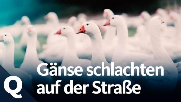 So reagieren Passanten auf das Tiere-Schlachten | Geschichten aus'm Alltag | Was is hier eigentlich los? | wihel.de