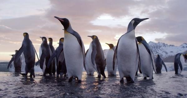 Der Pinguin-Fotograf David Yarrow - The Virtues of Monochrome | Was gelernt | Was is hier eigentlich los?