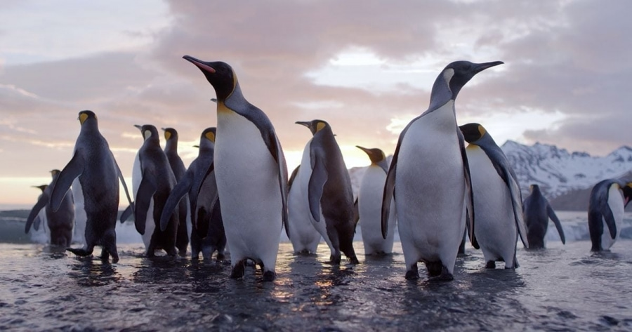 Der Pinguin-Fotograf David Yarrow - The Virtues of Monochrome | Was gelernt | Was is hier eigentlich los?