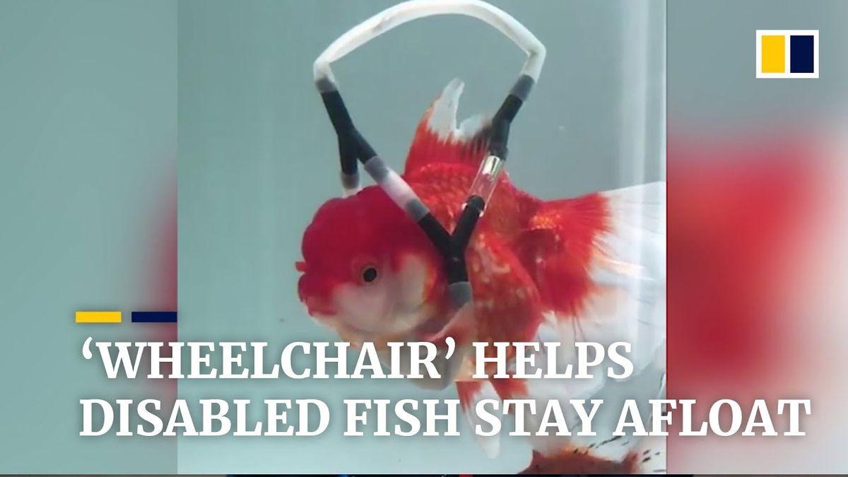Eine Schwimmhilfe für Goldfische | Gadgets | Was is hier eigentlich los?