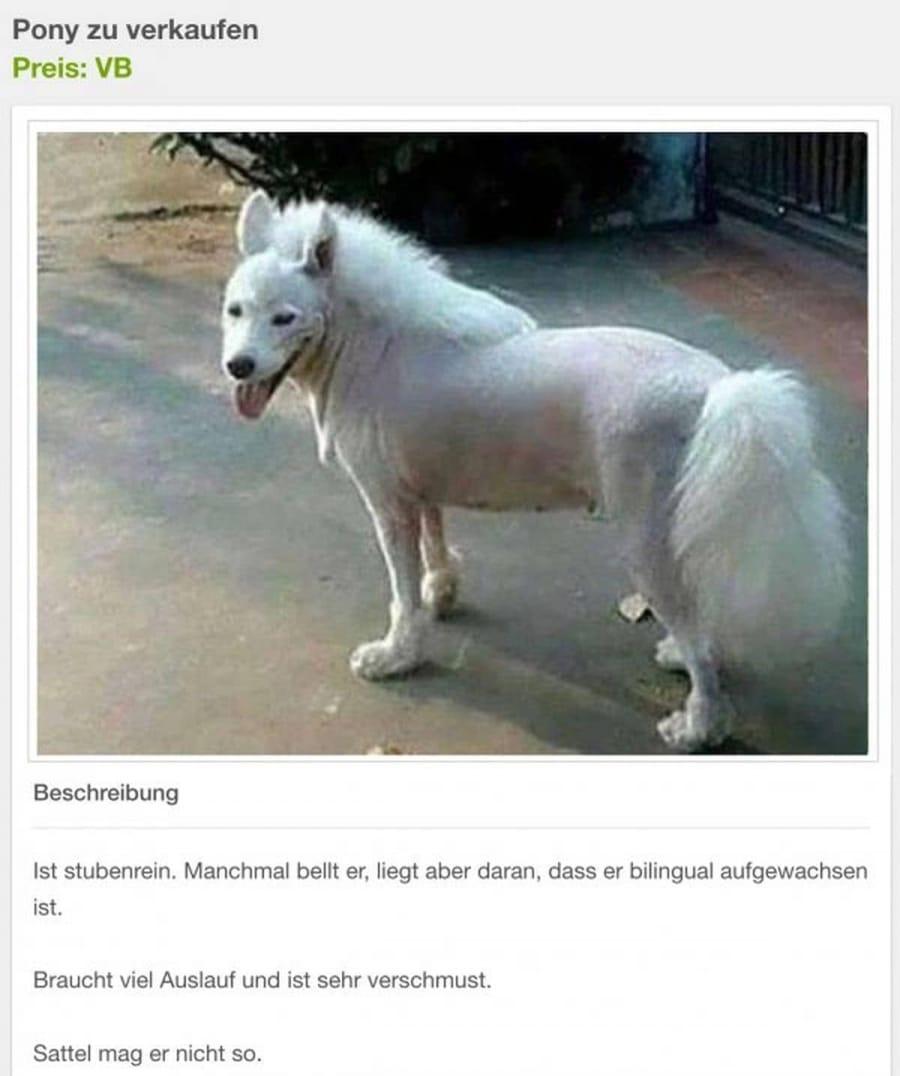 Pony anyone? | Lustiges | Was is hier eigentlich los?