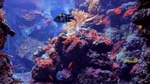 8 Stunden Korallenaquarium – Entspannung pur | Awesome | Was is hier eigentlich los?