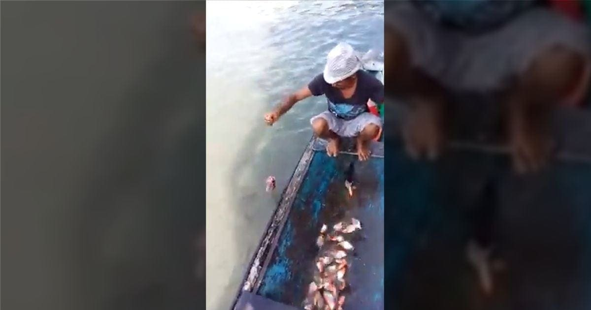 Wie man einfach Piranhas fängt | Was gelernt | Was is hier eigentlich los?