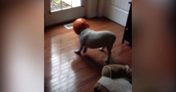 Hunde, die einen echt schlechten Tag haben   Lustiges   Was is hier eigentlich los?