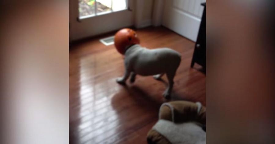Hunde, die einen echt schlechten Tag haben | Lustiges | Was is hier eigentlich los?