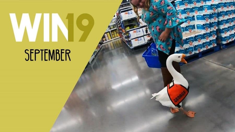 Win-Compilation September 2019   Win-Compilation   Was is hier eigentlich los?