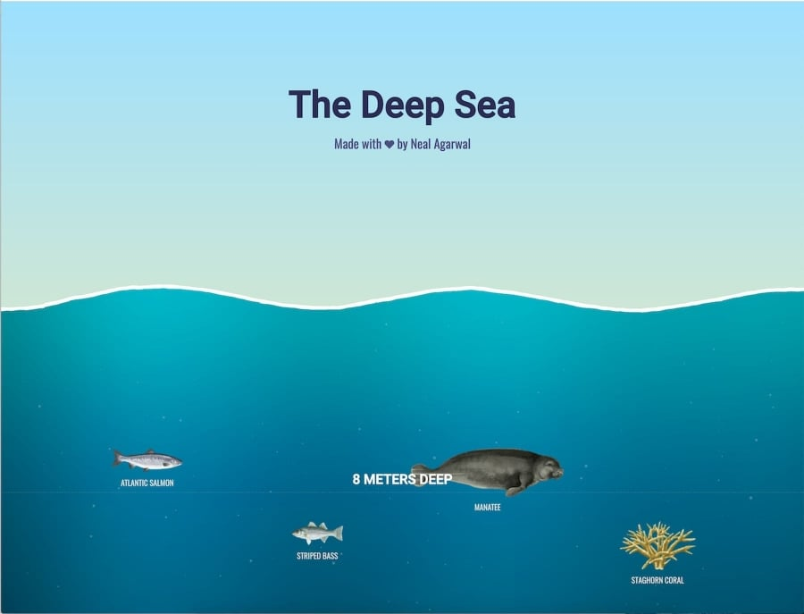 Eine spielerische Visualisierung aller Lebewesen in den unterschiedlichen Meerestiefen | Was gelernt | Was is hier eigentlich los?
