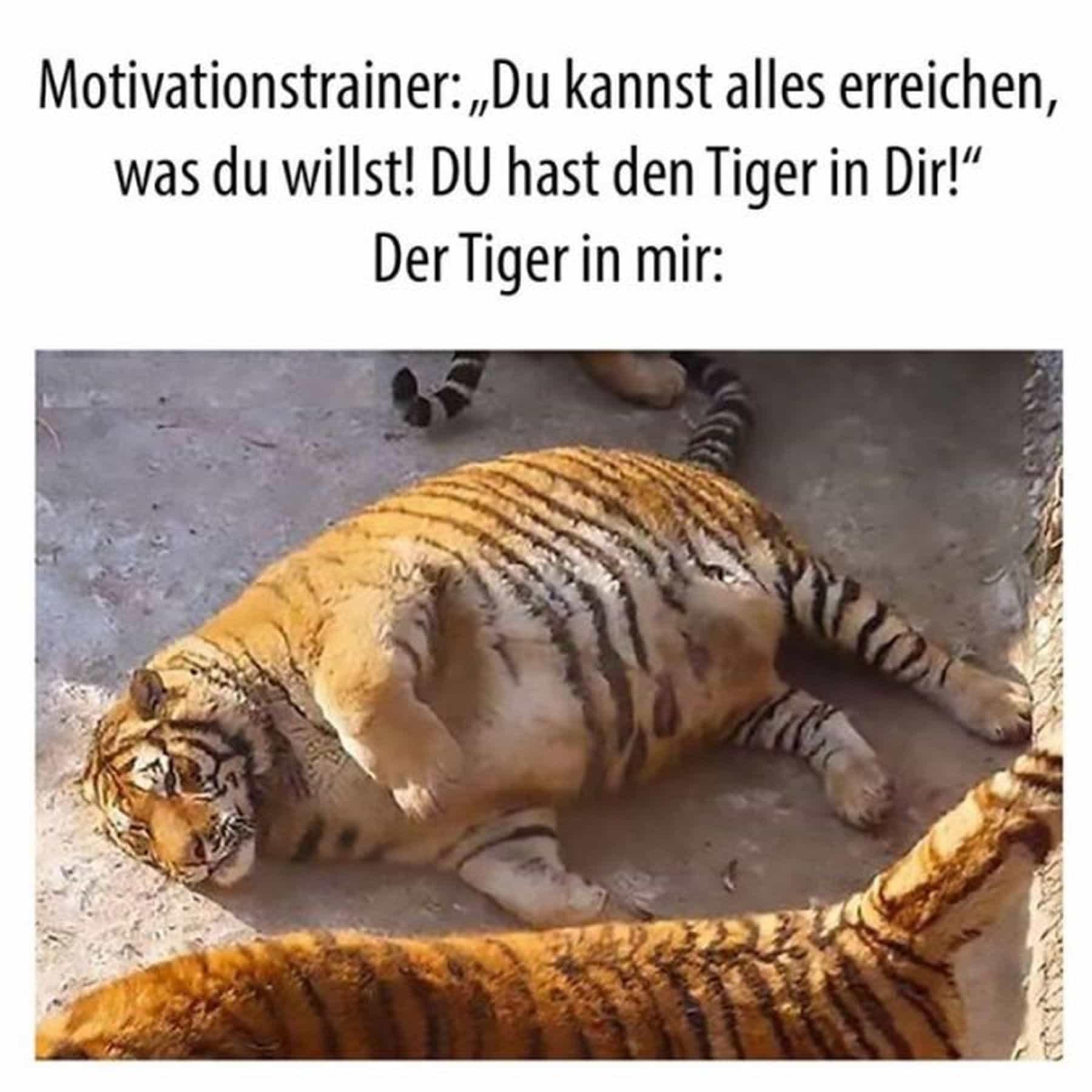 Der Tiger in mir nach der ersten Arbeitswoche im neuen Jahr | Lustiges | Was is hier eigentlich los?