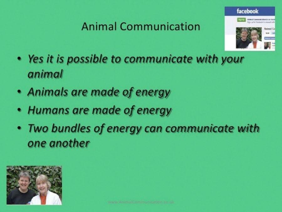 Die schlimmsten PowerPoint-Slides der Menschheit | WTF | Was is hier eigentlich los?
