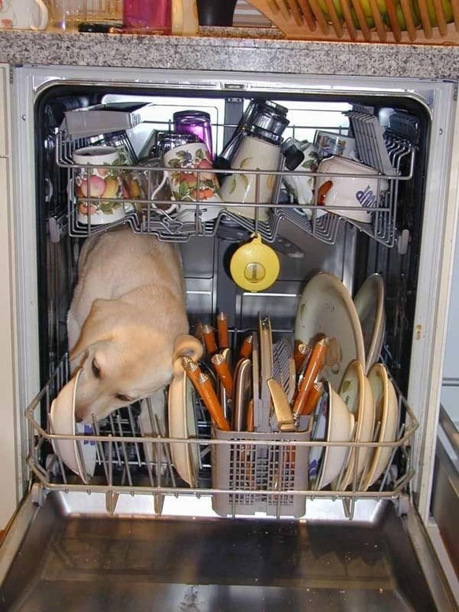 Wie Spülmaschinen wirklich funktionieren | Lustiges | Was is hier eigentlich los?