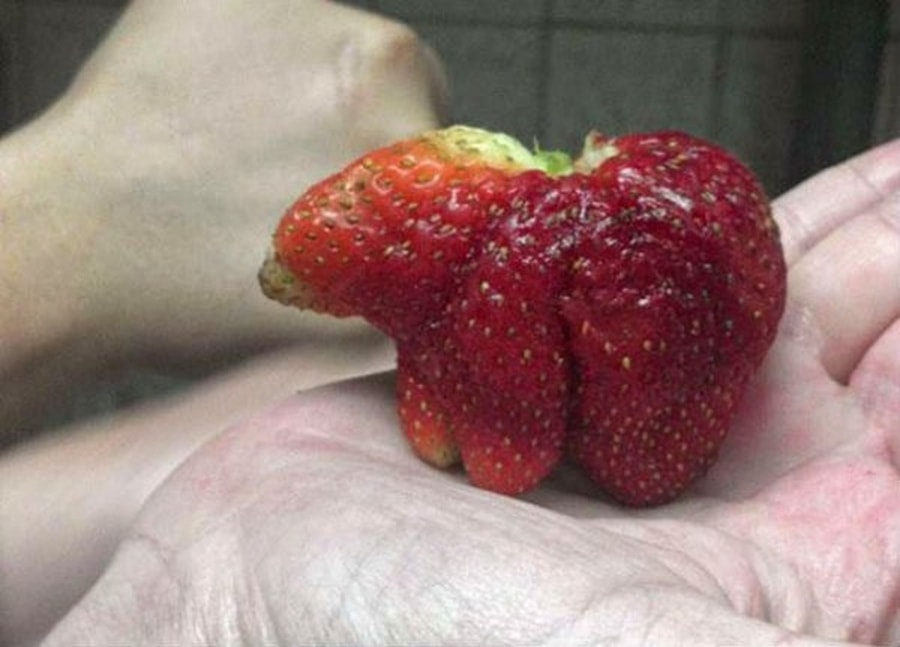 Nur ein seltenes Exemplar von einem Erdbeer-Bär | Lustiges | Was is hier eigentlich los?