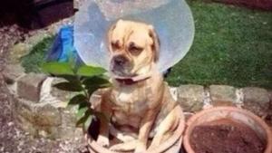 Wenn Hunde einfach keinen Bock mehr auf viel zu lange Gassirunden haben | Lustiges | Was is hier eigentlich los?