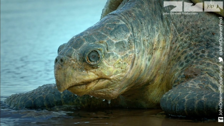 Eine Roboterschildkröte für Tierdokus | Gadgets | Was is hier eigentlich los?