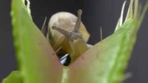 Macro-Aufnahmen von Tieren in fleischfressenden Pflanzen | Awesome | Was is hier eigentlich los?