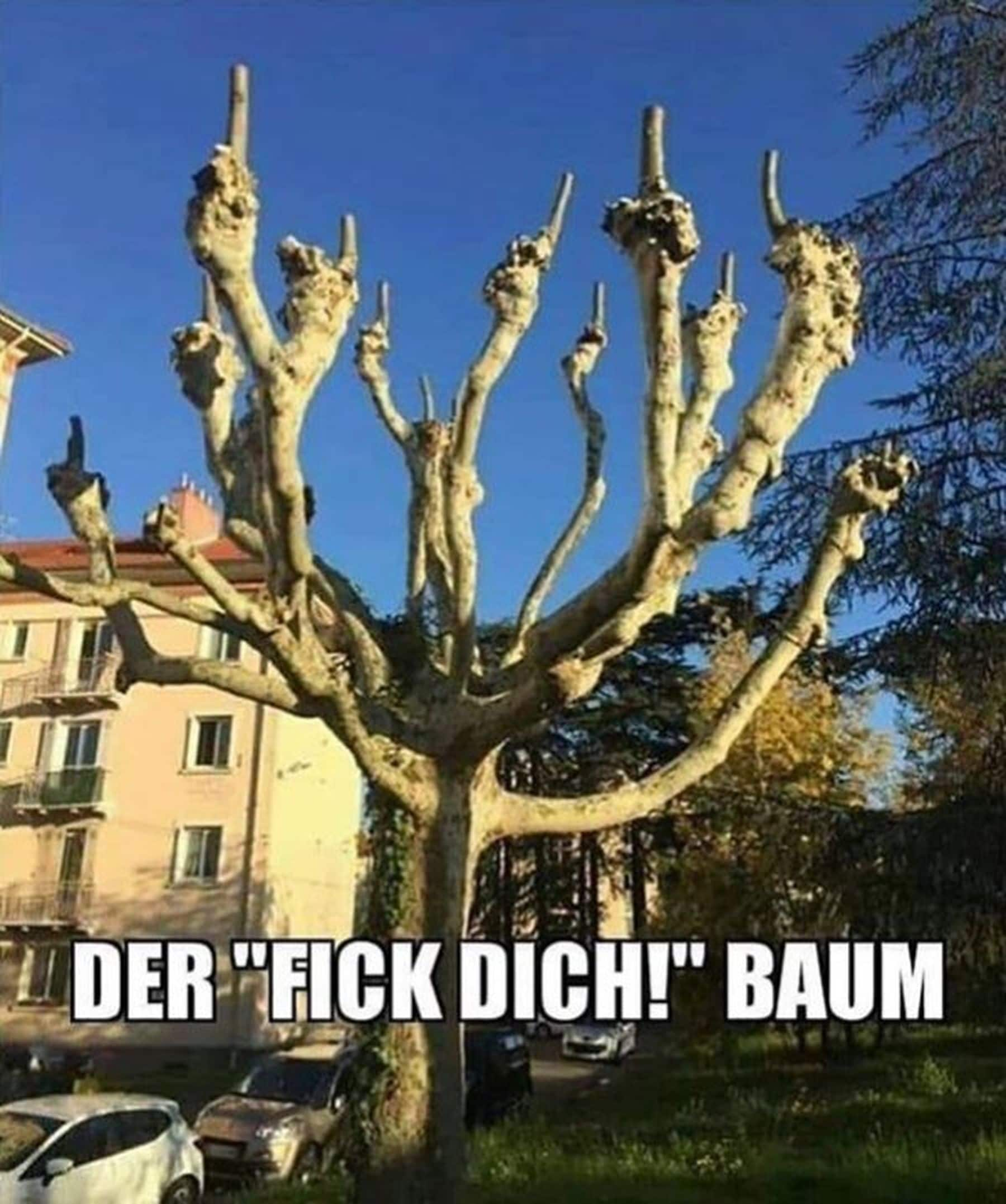 Mein Lieblingsbaum | Lustiges | Was is hier eigentlich los?
