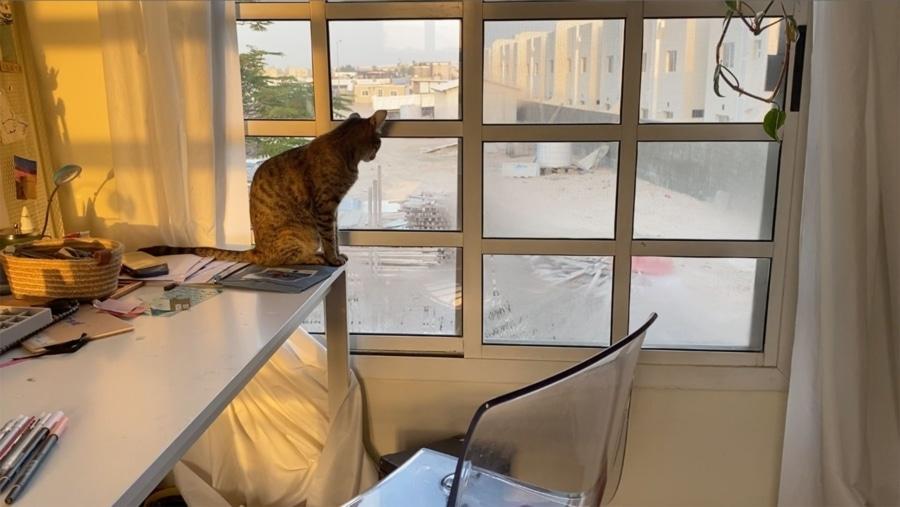 Bei anderen einfach mal durchs Fenster schauen | Awesome | Was is hier eigentlich los?