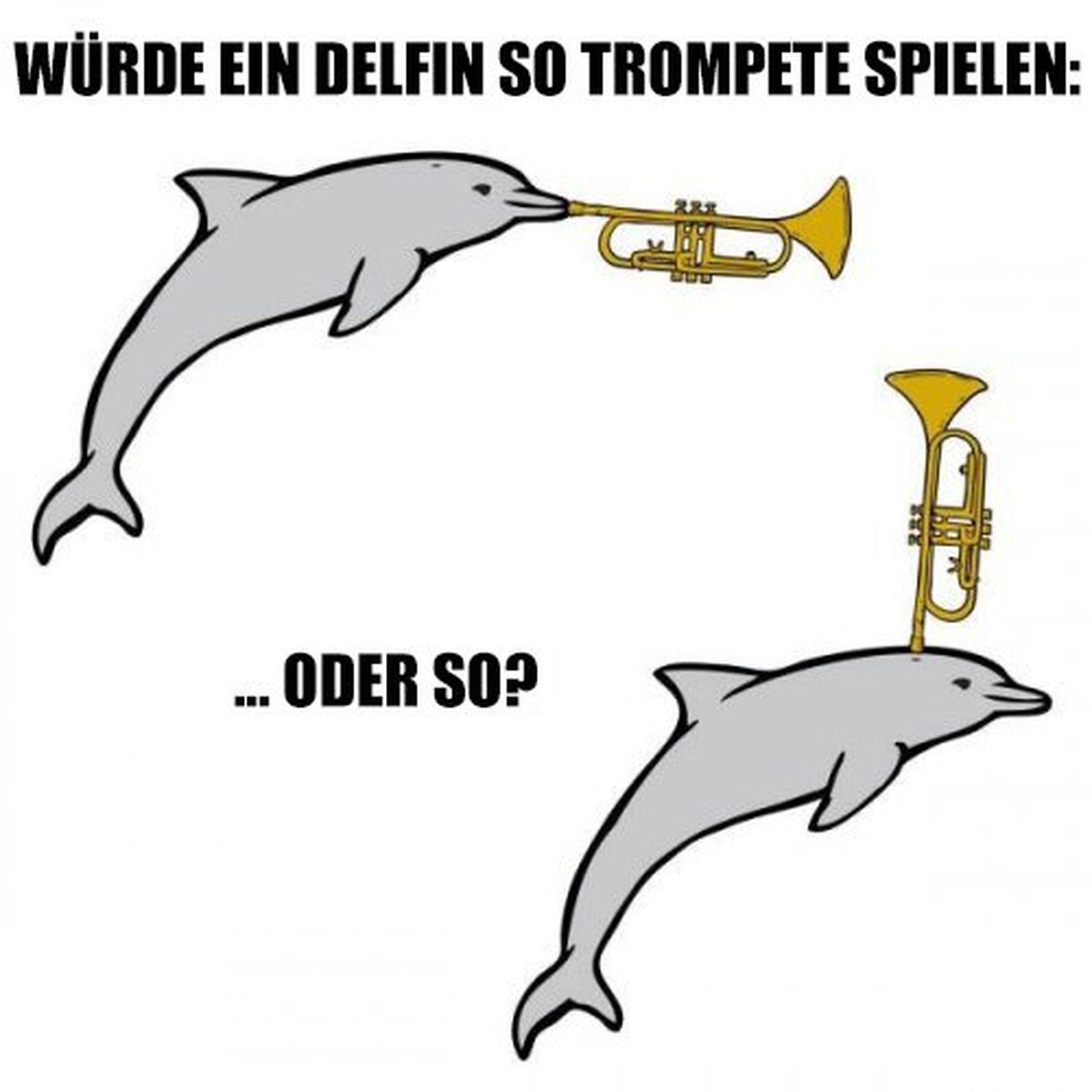 Frage der Woche: Delfine und ihre Trompeten | Lustiges | Was is hier eigentlich los?