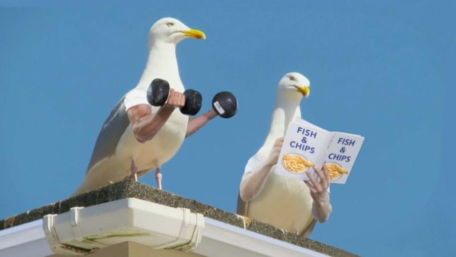 Wieder Vögel mit Armen | Lustiges | Was is hier eigentlich los?