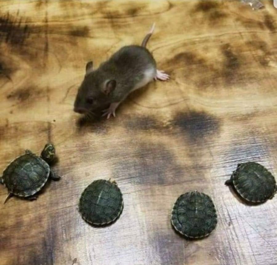 2020 – Auch das Jahr, in dem die Turtles ihr Training beginnen | Lustiges | Was is hier eigentlich los?