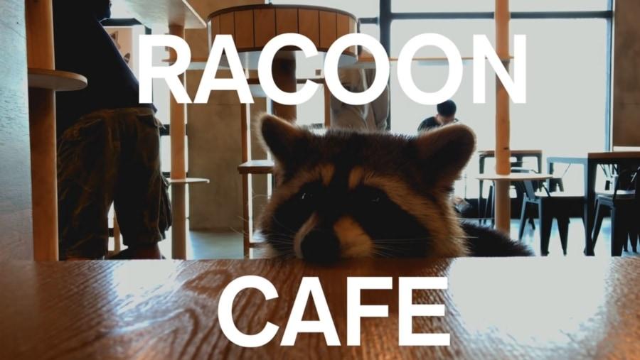 In Seoul gibt es ein Café voller Waschbären | WTF | Was is hier eigentlich los?
