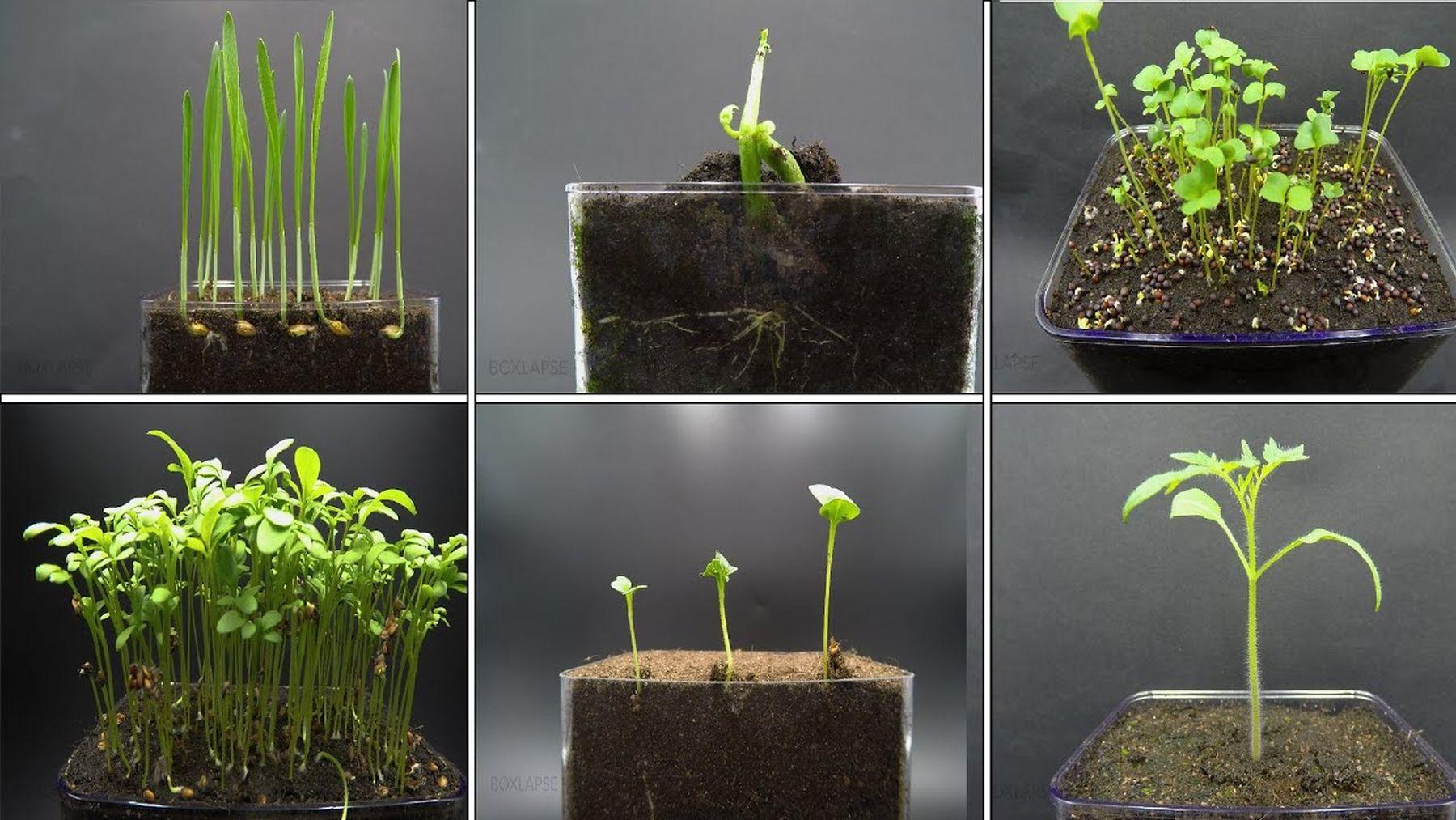 Dank Zeitraffer Pflanzen beim Wachsen zuschauen | Timelapse | Was is hier eigentlich los?