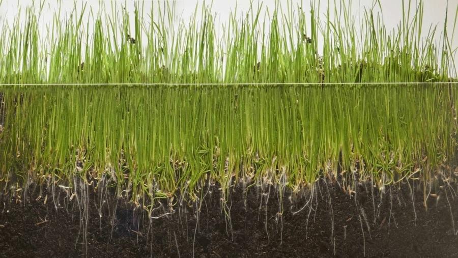 Timelapse: Gras beim Wachsen zusehen | Timelapse | Was is hier eigentlich los?