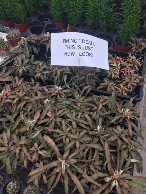 Diese Pflanze spricht mir aus der Seele | Lustiges | Was is hier eigentlich los?