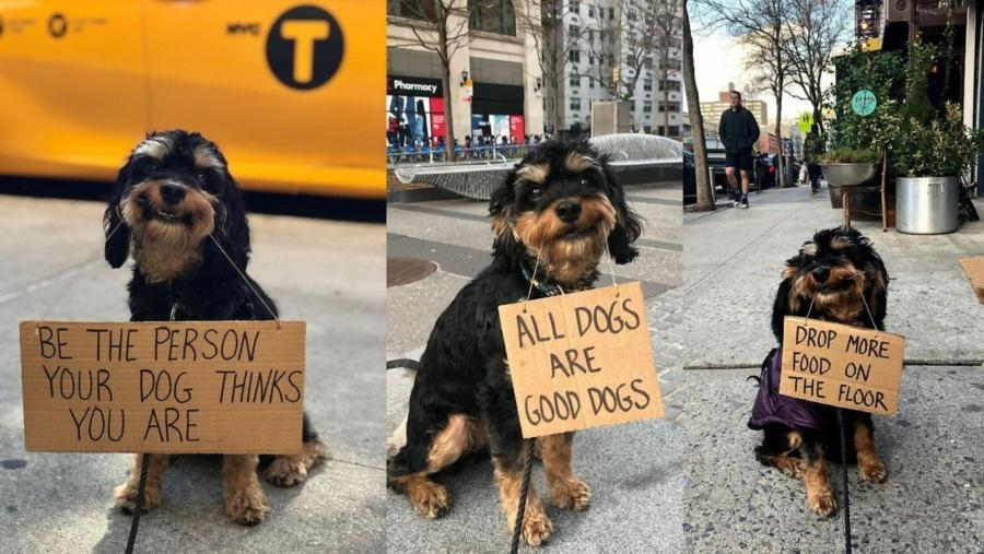 Dog With Sign – Auch Hunde wollen protestieren | Lustiges | Was is hier eigentlich los?