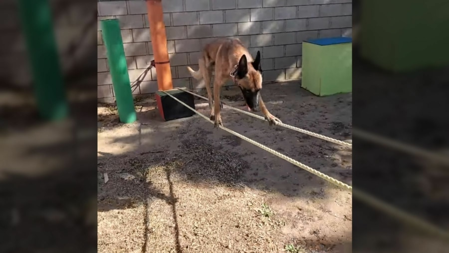 Wie man als Hund wirklich einen Hindernis-Parkour meistert   Awesome   Was is hier eigentlich los?