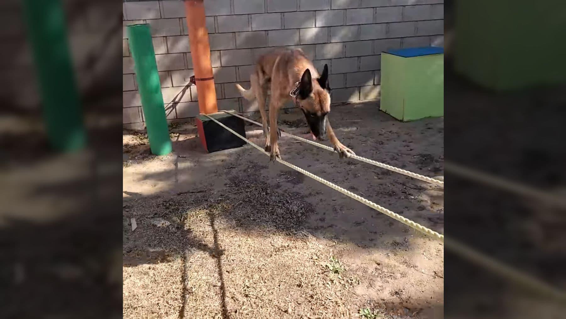 Wie man als Hund wirklich einen Hindernis-Parkour meistert | Awesome | Was is hier eigentlich los?