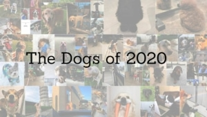 The Dogs of 2020 | Awesome | Was is hier eigentlich los?
