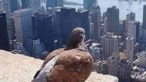 Und wieder denkt niemand an die Tauben | Lustiges | Was is hier eigentlich los?