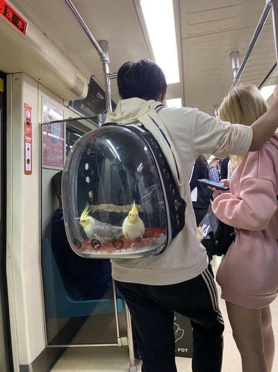 Wenn du ohne deine Vögel nicht rausgehen willst ... | Lustiges | Was is hier eigentlich los?